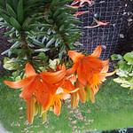 Fleurs - Galaxy S6